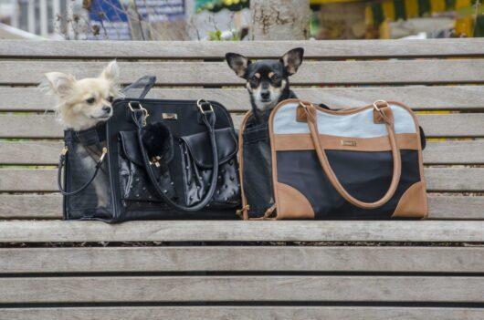Trasportini cani