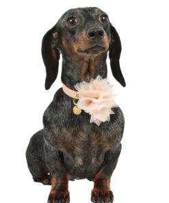Collare cani Dahlia 2